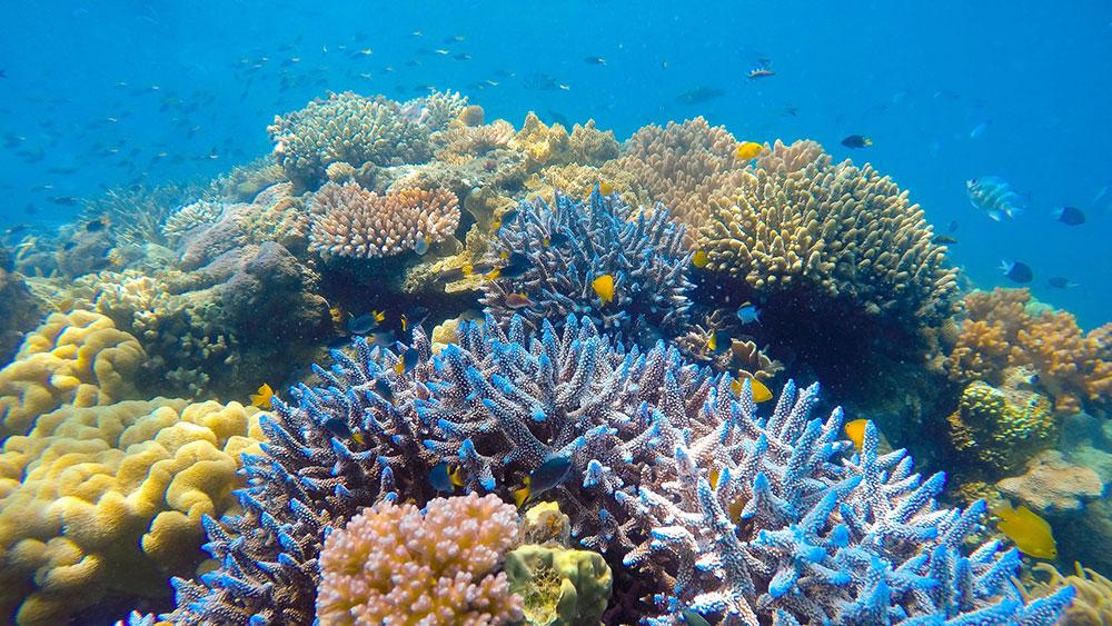 Ocean Safari Reef Snorkel